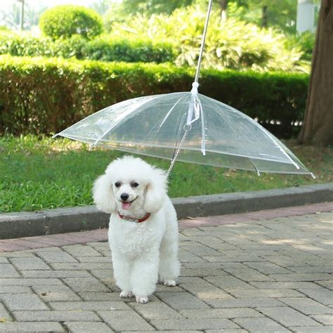 dogs for dogs there s an umbrella for your simplemost