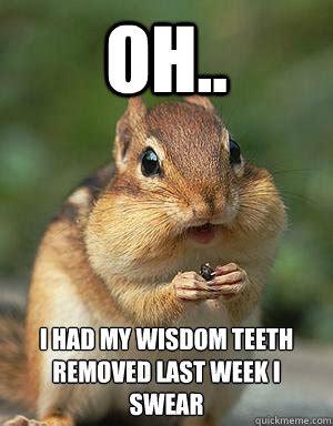 Chipmunk Meme - oh i had my wisdom teeth removed last week i swear