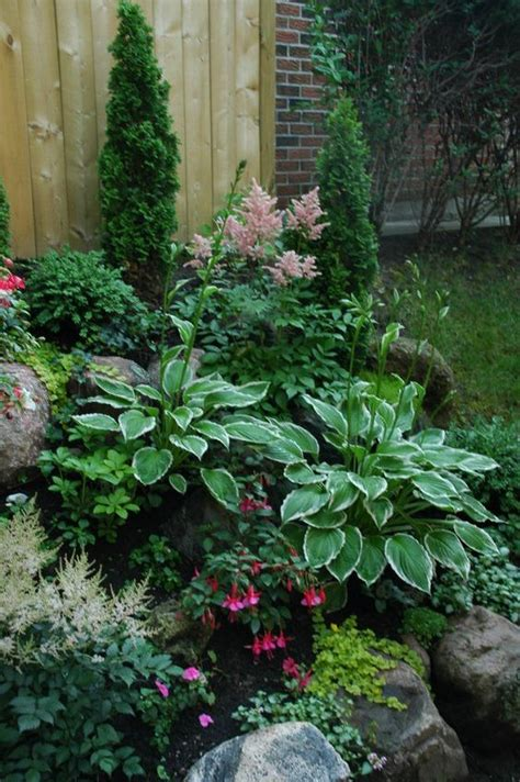 plants for side of house shade garden plants shade garden and garden plants on pinterest