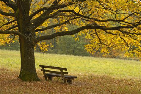 tree and bench in fall photograph by matthias hauser