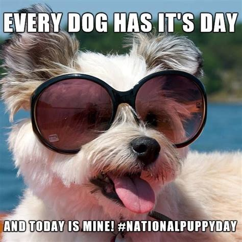 happy national puppy day happy national puppy day show us your i98fm