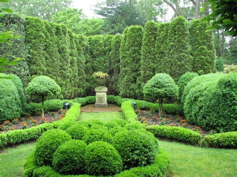 ny topiary thuja arborvitae fir topiaries and boxwood parterres