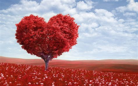 images of love tree heart tree hd love 4k wallpapers images backgrounds