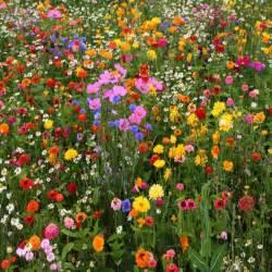 vermont wildflower farm gardening with us blog