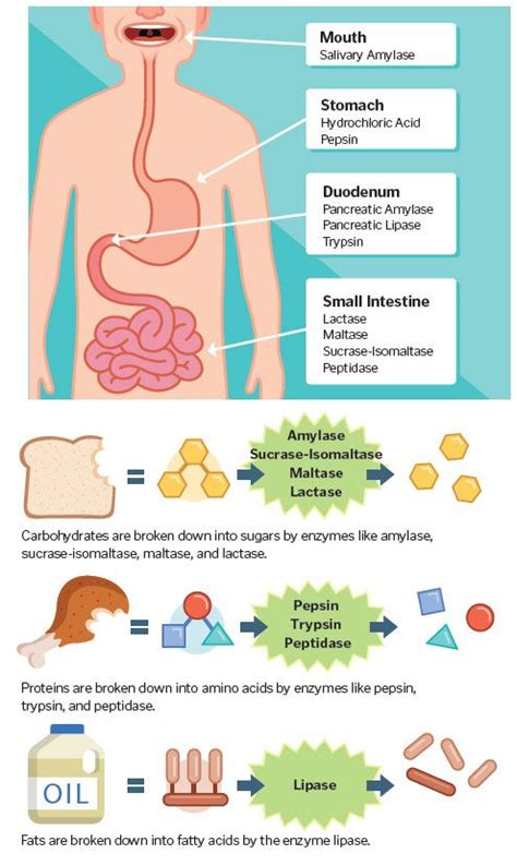 7 Tips To A Healthy Digestive System by 51 Best Images About Digestive On Health Gut