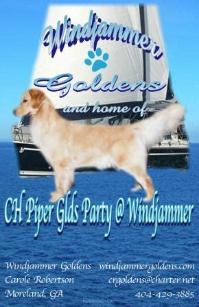 top golden retriever breeders in the midwest golden retriever breeder website photo