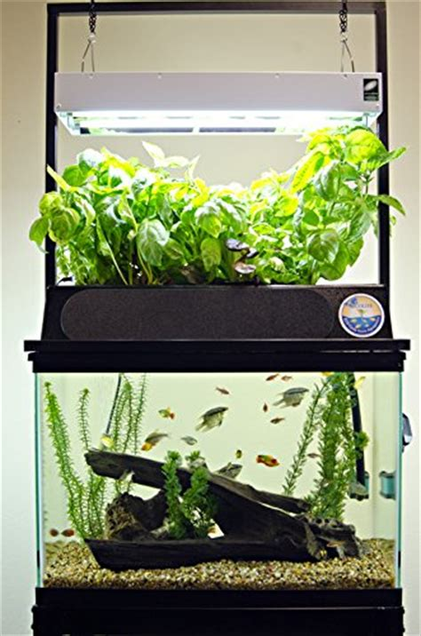 starting aquaponics starter kits aquariums