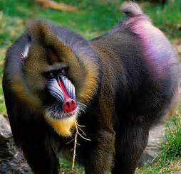 monkey with colorful history of creatures types of monkeys