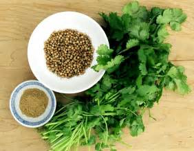 Coriander at soniya s kitchen the premier vegetarian