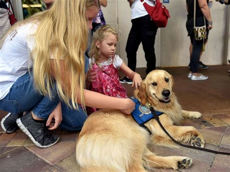 comfort dog laws we mourn for the potential that was lost vigil held for