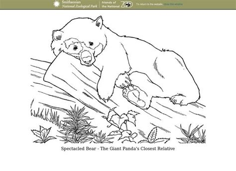 spectacled bear coloring page digital chalkboard