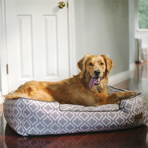 play dog beds here s how to seamlessly incorporate your dog s bed into