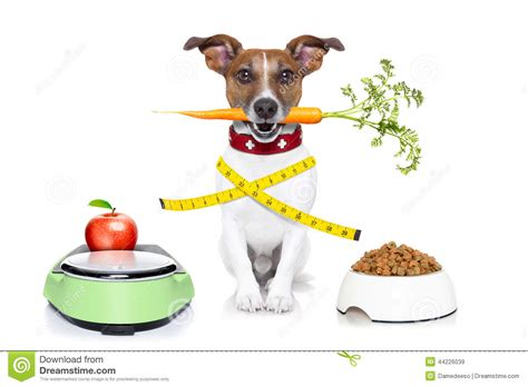 healthy dogs healthy stock photo image 44226039