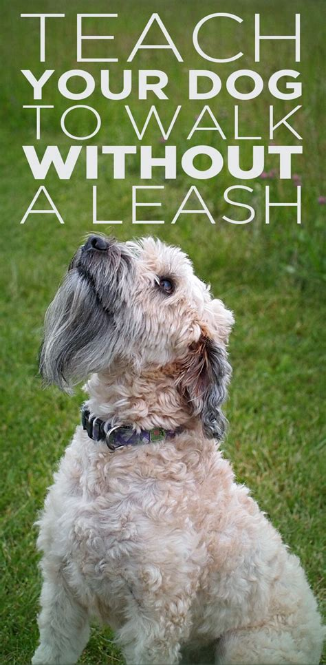 teaching a puppy to walk on a leash 25 best ideas about fashion on bet owner