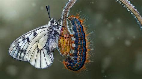 butterfly  caterpillar hd wallpaper wallpaper studio  tens  thousands hd  ultrahd