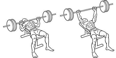 bench press eccentric phase pt on the net