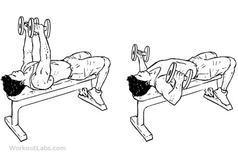 flat bench dumbell flys flat bench dumbbell fly man pinterest exercises