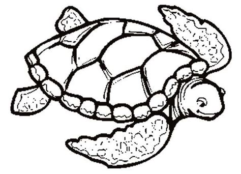 turtle coloring pages the slow animals gianfreda net