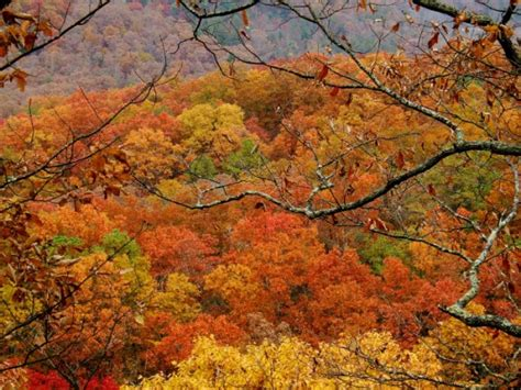 fall foliage in virginia when will leaves peak