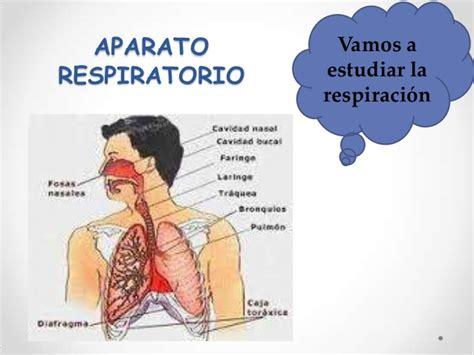 imagenes del sistema respiratorio ingles sistema respiratorio auura