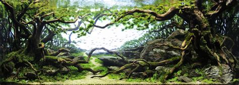 Aquascaping Competition The Majestic Aquariums Of The Tokyo Aquascape Union
