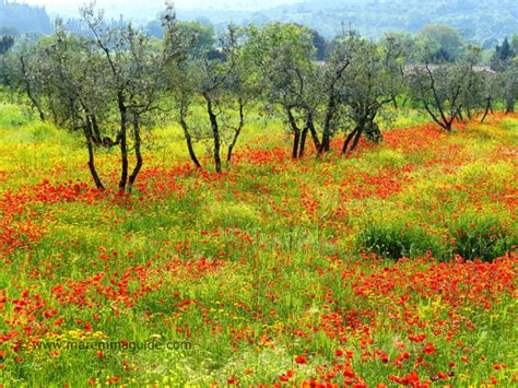 that month in tuscany the best time to see flowers in tuscany italy
