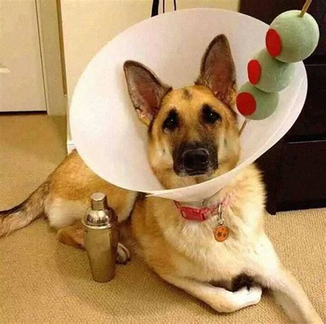 cone for dogs 19 creative pet cones that your pet will even more