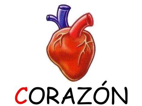 imagenes de corazones del cuerpo humano cuerpo humano corazon pictures to pin on pinterest pinsdaddy