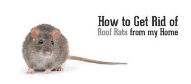 how do i get rid of rats in my backyard blue sky pest