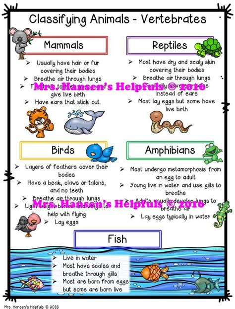 i mammal the story of what makes us mammals books best 25 vertebrates ideas on vertebrates and