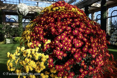 Anemone Megumi a thousand blooms the of the chrysanthemum the