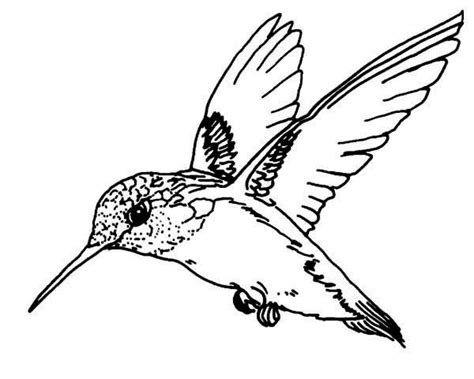 coloring pages birds and insects 94 coloring page of birds and insects insects