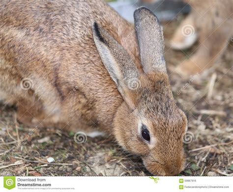 Rabbit Hutch Prices Rabbit With Long Ears And Ruffled Fur Stock Photo Image