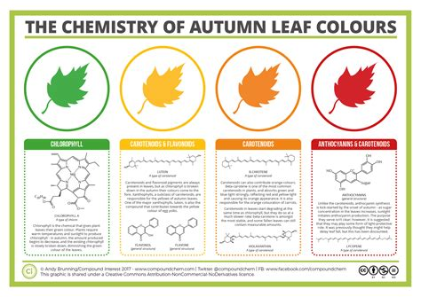 color chemistry the chemicals the colours of autumn leaves