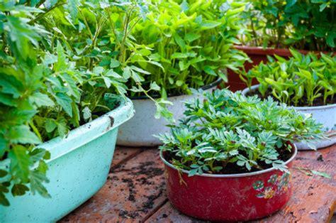 preparing soil for a vegetable garden preparing soil for a vegetable garden your foundation