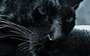 Ta Jaguar Jaguar Duvar Ka茵莖tlar莖 Hd Jaguar Wallpapers 1 Yeni Resim Var