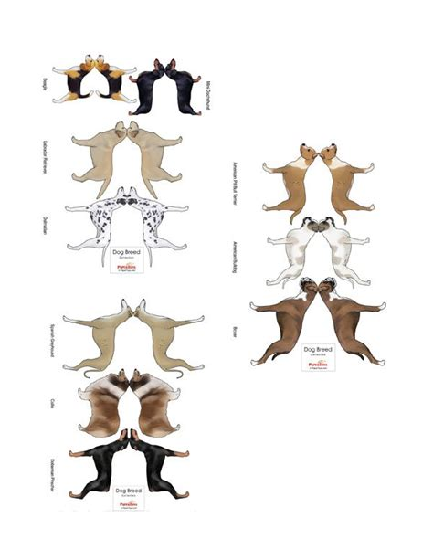 printable animal figures 291 best paper doll cats dogs images on pinterest
