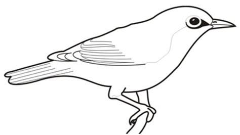 identifikasi jenis burung edukasi