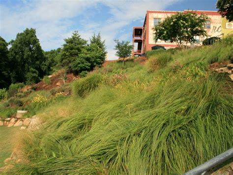 pretty plants  sunny slopes wwwsclivingcoop