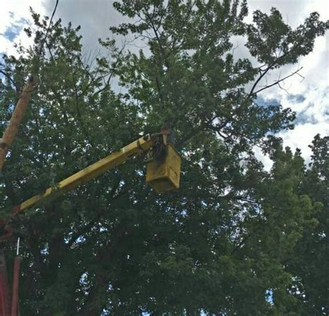 This A Grapewood Tree Yelp Cutshall S Tree Service 26 Photos Tree Services