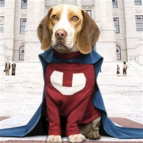 underdogs the film 33 best super hero underdog for relay for life images on