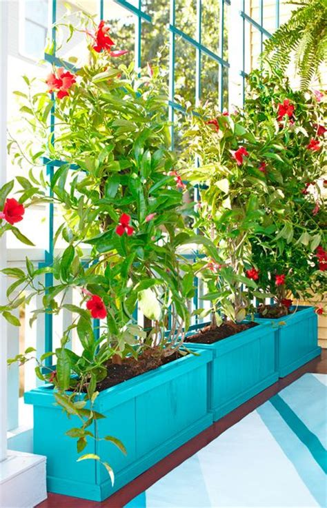 climbing plants for privacy rely on plants for privacy this planter box and trellis