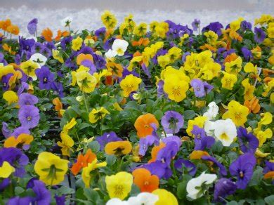 top 28 all seasons plants and flowers 28 best all season flower plants flowers by season