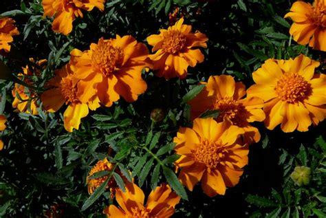 fiori dei morti la finestra di stefania 01 05 2011 la finestra di stefania