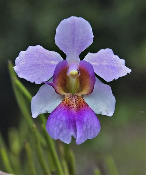 garden orchids and roses auf pinterest orchideen dfte 4274 besten orchideen bilder auf pinterest sch 246 ne