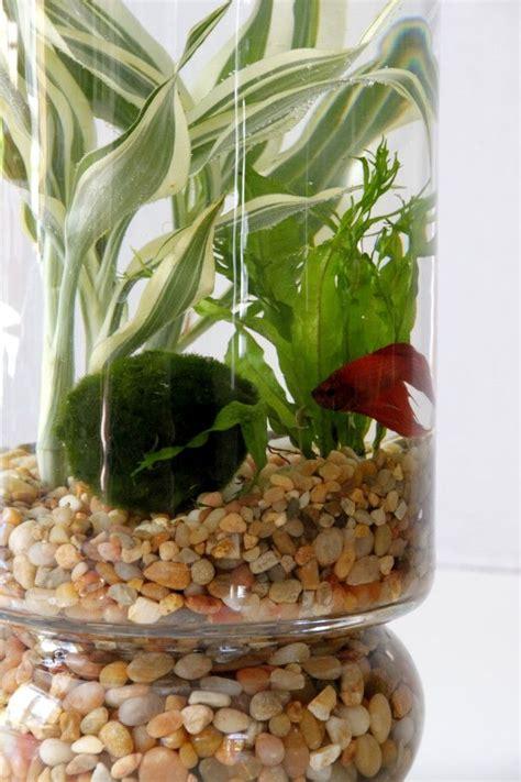 indoor water garden plants 25 best ideas about indoor water garden on