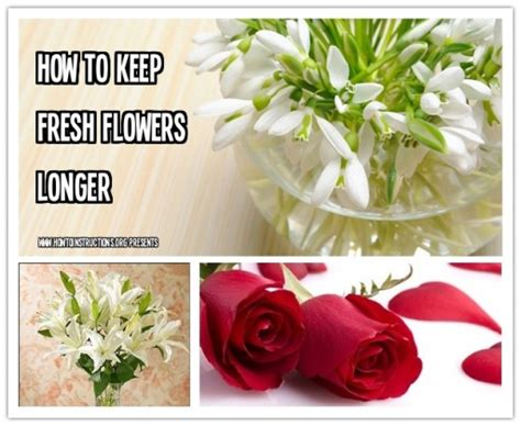 How Do You Keep Roses Fresh In A Vase by How To Keep Fresh Flowers Longer How To