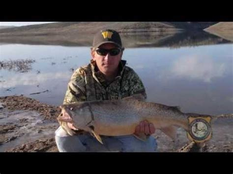 Records Wyoming Colorado State Record Tiger Trout Doovi