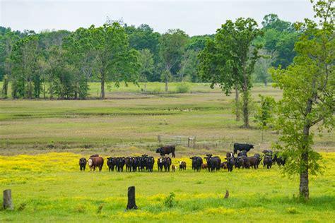 dude ranch mount vernon ranch republic ranches