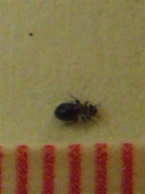 natureplus tiny black beetles